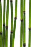 бамбук запруживает Дзэн Стоковая Фотография RF