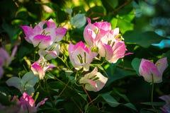бамбук золотистый Стоковое Изображение