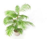 Бамбук изгороди Fernleaf, Стоковое Фото