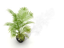 Бамбук изгороди Fernleaf, Стоковая Фотография RF