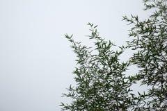Бамбук и небо стоковое изображение
