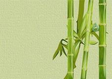 Бамбук и падение иллюстрация штока