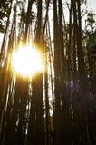 бамбук над солнцем Стоковые Изображения