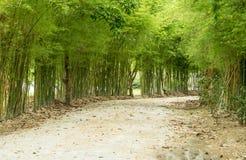 Бамбук оба сторона дороги Стоковое Изображение RF
