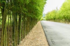 Бамбук оба сторона дороги Стоковое Фото