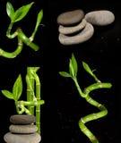 бамбук облицовывает Дзэн Стоковое фото RF