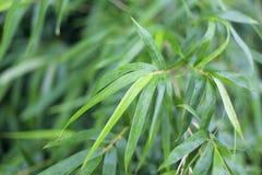 Бамбук дождя Стоковые Фото