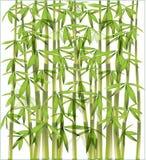 бамбук предпосылки