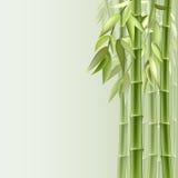 бамбук предпосылки Стоковая Фотография