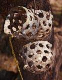 Бамбук сделал фото объекта коровы округлой формы изолированное муску стоковые изображения rf