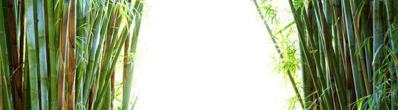 Бамбук скопируйте космос Стоковая Фотография