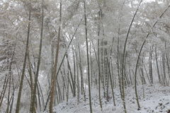 Бамбук снега Стоковое Фото