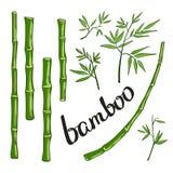 Бамбук с зелеными листьями также вектор иллюстрации притяжки corel Стоковые Фото