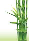бамбук удачливейший Стоковое Изображение RF
