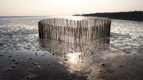 Бамбук формы сердца для предохранения от размывания побережья волной Стоковые Изображения RF