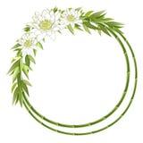 бамбук цветет рамка круглая Стоковые Фотографии RF