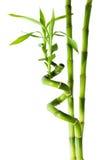 Бамбук - 3 черенок Стоковое Изображение