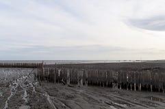 Бамбук для защищает заболоченные места, низкий ключ и влияние года сбора винограда Стоковое Изображение RF