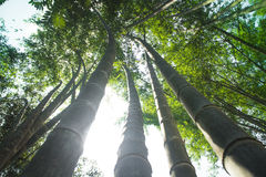 Бамбук для того чтобы построить дом Стоковые Изображения RF