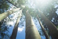 Бамбук для того чтобы построить дом Стоковые Фото