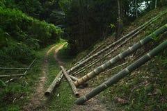 Бамбук для того чтобы построить дом Стоковая Фотография RF