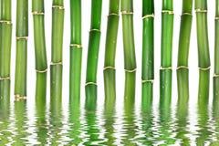 Бамбук Стоковые Изображения RF