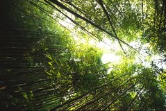 бамбук 2 Стоковое фото RF