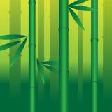 Бамбук Стоковое Изображение