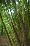 бамбук Стоковые Фотографии RF