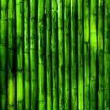 Бамбук Стоковая Фотография