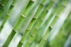 бамбук Стоковое Фото
