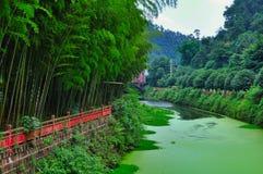 Бамбук forrest стоковое фото rf