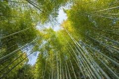 Бамбук forrest Стоковые Фотографии RF