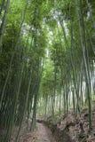 Бамбук forrest стоковое изображение rf