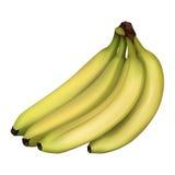 бананы зрелые Стоковая Фотография