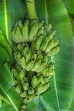 Бананы образовывают положение на поле стоковая фотография