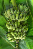 Бананы образовывают положение на поле стоковое изображение