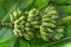 Бананы образовывают положение на поле стоковые фото