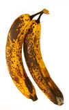 бананы mouldy Стоковые Изображения