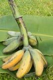 банан большой Стоковые Изображения RF