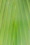 Банан вентилятора Стоковое Фото