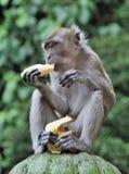 банан есть обезьяну Стоковые Изображения