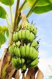 Банан на вале стоковые фото