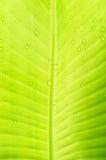 банан падает вода листьев абстрактная предпосылка Стоковое фото RF
