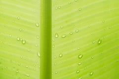 банан падает вода листьев абстрактная предпосылка Стоковая Фотография RF