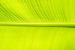 банан падает вода листьев абстрактная предпосылка Стоковое Изображение RF