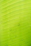 банан падает вода листьев Предпосылка Abstact Стоковое Изображение RF