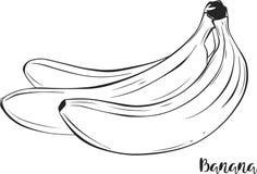 Банан Плодоовощ вектор Стоковые Изображения RF