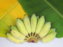Банан помещенный на лист зеленого цвета банана и лист банана желтых Стоковое Фото