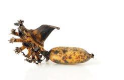 банан предпосылки закрепляя легкий архив включает путь зрелый к белой работе Стоковое Фото